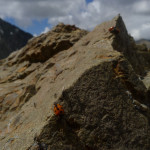 Mt Manakau: Ladybirds